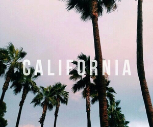 california, summer, and palm trees image