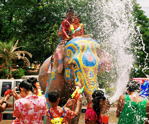 beautiful, elephants, and festival image