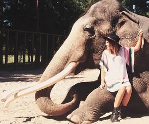 elephant, girl, and amazing image
