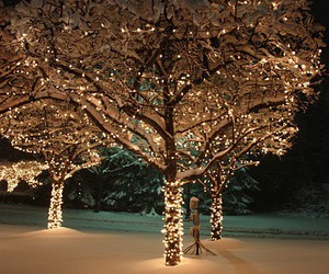light, winter, and christmas image