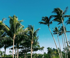 blue, palmtrees, and spring image