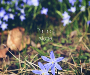 alone, flowers, and nikon image