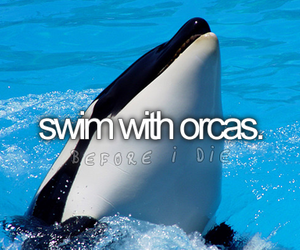 orca, before i die, and swim image