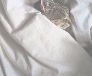 cat, cute, and sleep image