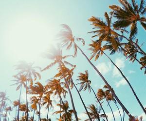 hawaii, palm, and palmtree image