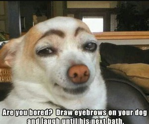 eyebrows, funny, and dog image