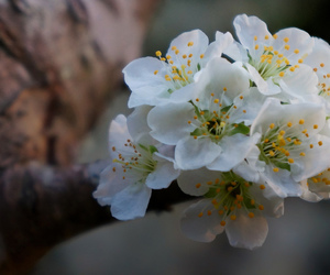 blooms, nature, and nature photography image