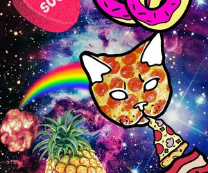 bacon, cat, and donuts image