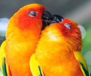 parrots image