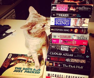 books, cat, and collection image