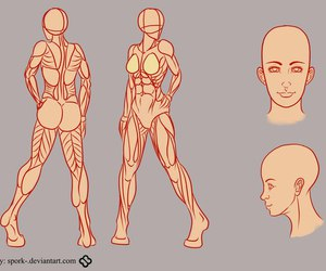 anatomy, drawing, and human anatomy image