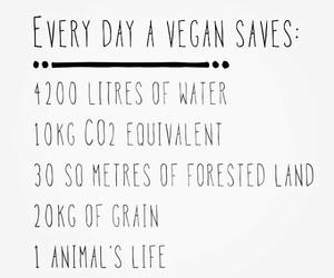 vegetarianism image