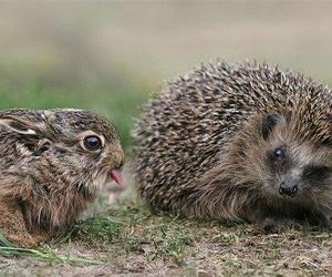 hedgehog, rabbit, and animal image