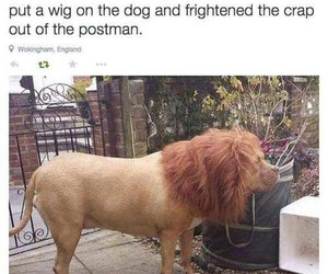 funny, dog, and lion image