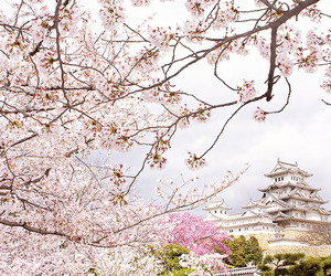 blossom, japan, and lovely image