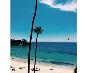 beach, palm, and cool image