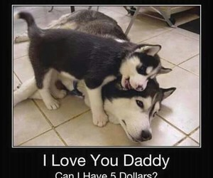 daddy, funny, and huskies image