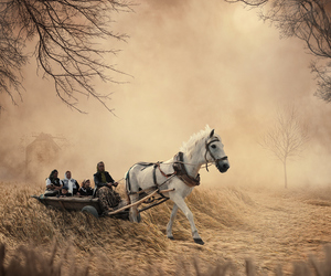horses, people, and cultures image