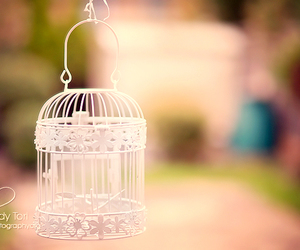 cage and white image