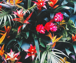background, palms, and flowers image