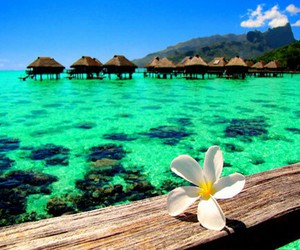 summer, flowers, and sea image