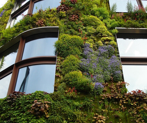 building, plants, and windows image