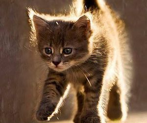 cat, animals, and kittens image