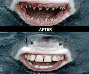 funny, colgate, and shark image