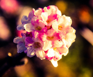 background, flower, and life image