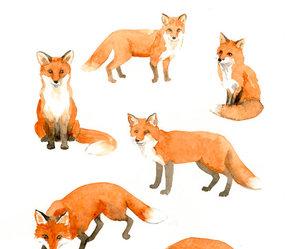 fox, animal, and drawing image
