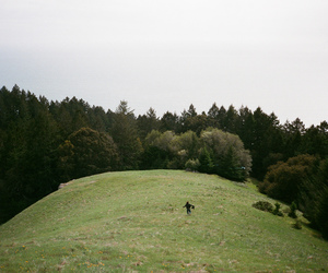 35mm, green, and bay area image