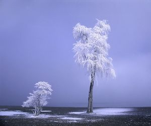 beautiful, nature, and frost image