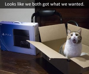 funny, cat, and awesome image