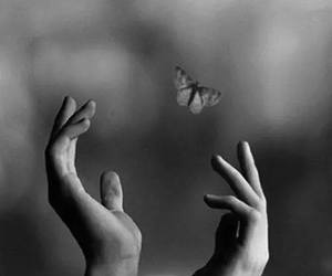 black and white, butterfly, and freedom image