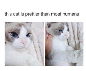 cat, pretty, and beautiful image