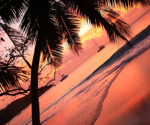 beach, palm trees, and sunset image