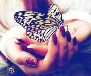 butterfly, nails, and animal image