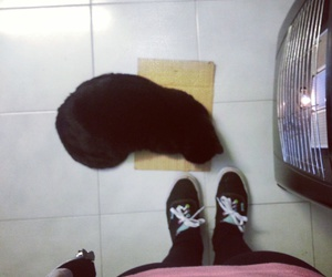 black, cat, and me image