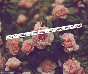 rose, quote, and sweetheart image