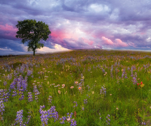 field, flowers, and landscape image