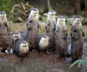 otters and cute image