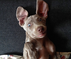 animals, blue, and dog image