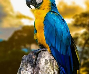 parrot, amazing, and animal image