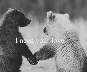 love, bear, and need image