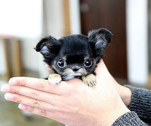 animals, chihuahua, and cup image