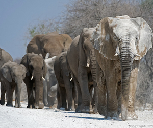 African and elephants image