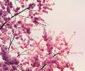 spring, pink, and pretty image
