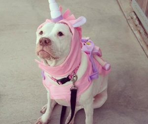 dog, unicorn, and cute image