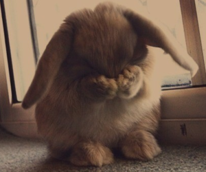 adorable, brown, and rabbit image