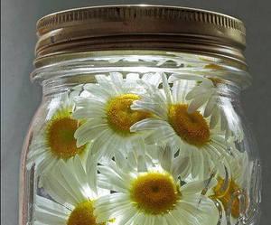 diy, daisy, and masonjar image